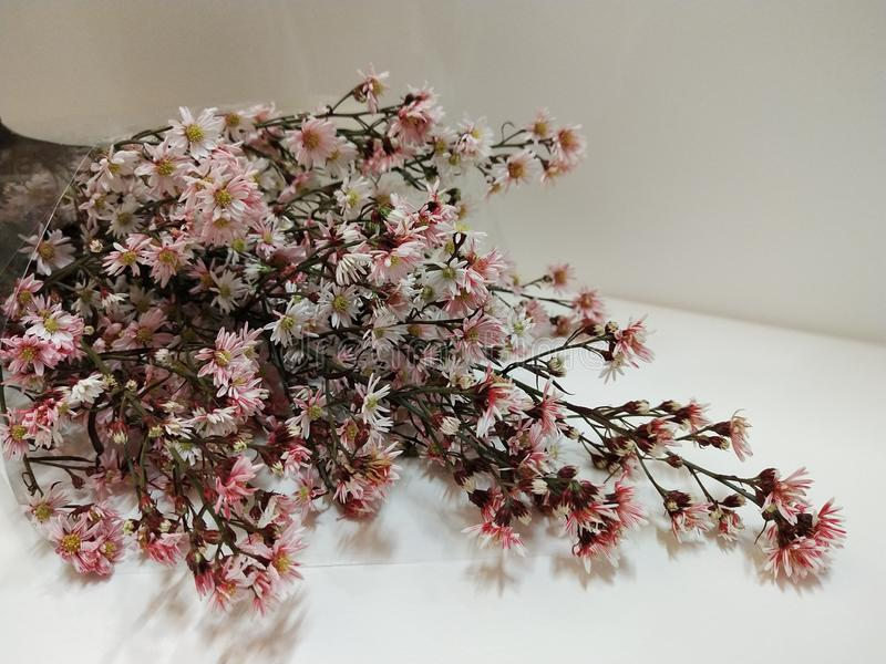 bunch of dried flowers on white background stock images