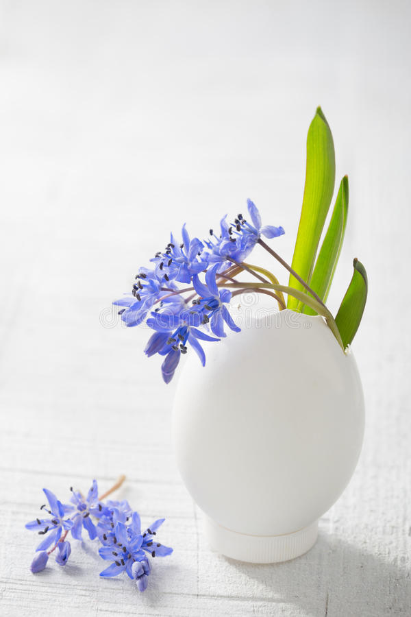 Bunch of early spring flowers ( Scilla siberica) royalty free stock images