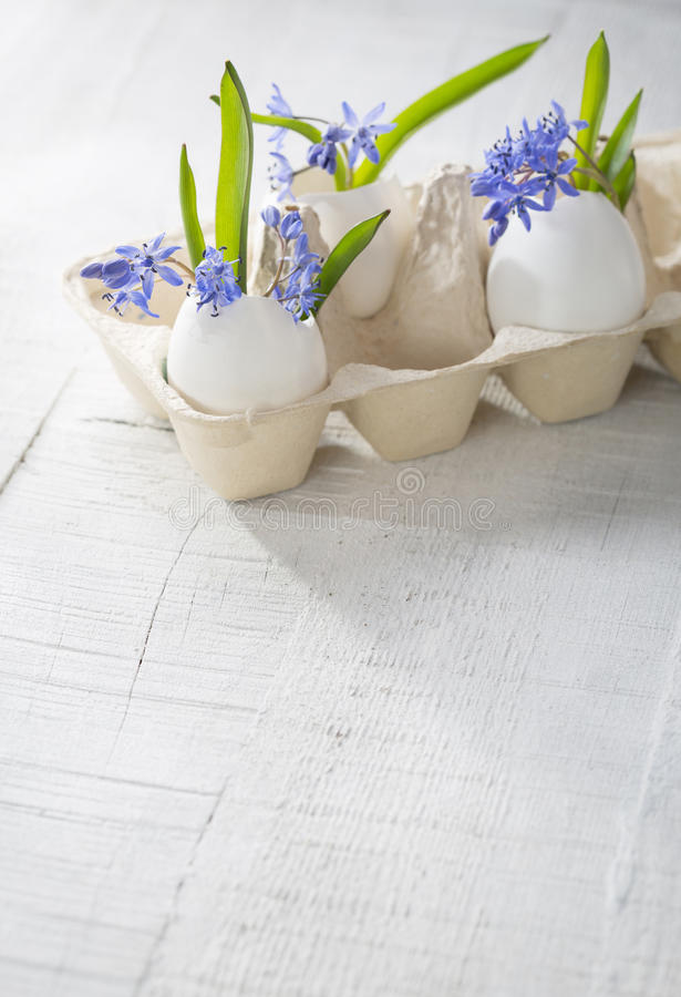 Bunch of early spring flowers ( Scilla siberica) in eggshells. royalty free stock photography