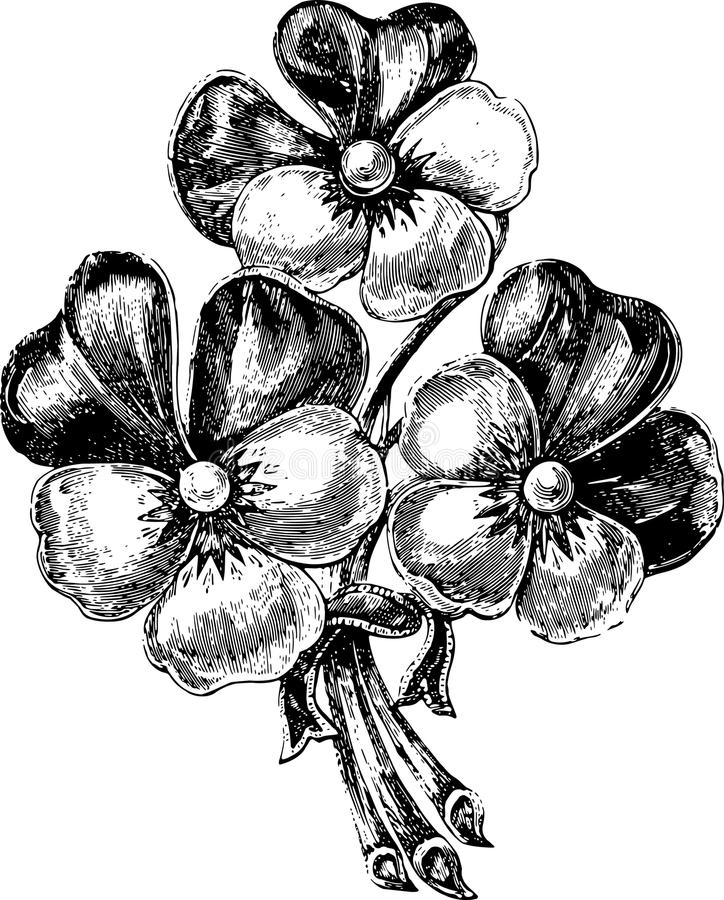 Bunch of flowers. The Bunch of flowers in style of an ancient engraving royalty free illustration