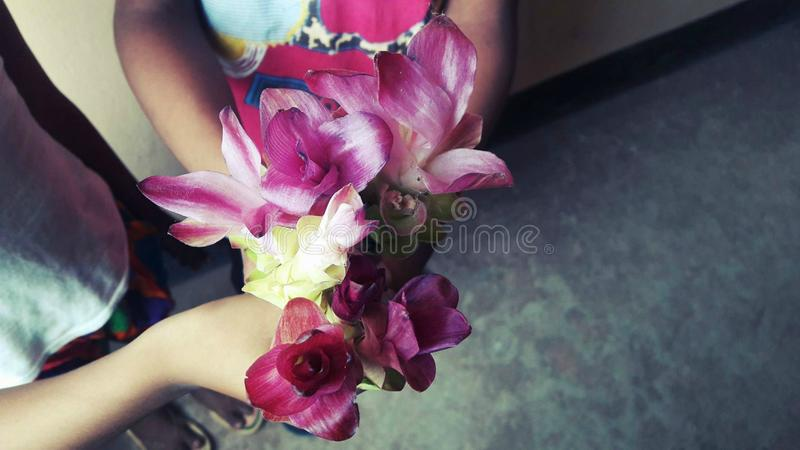 Bunch of flowers. stock image