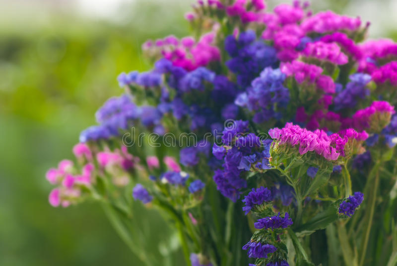 Bunch of flowers royalty free stock photos