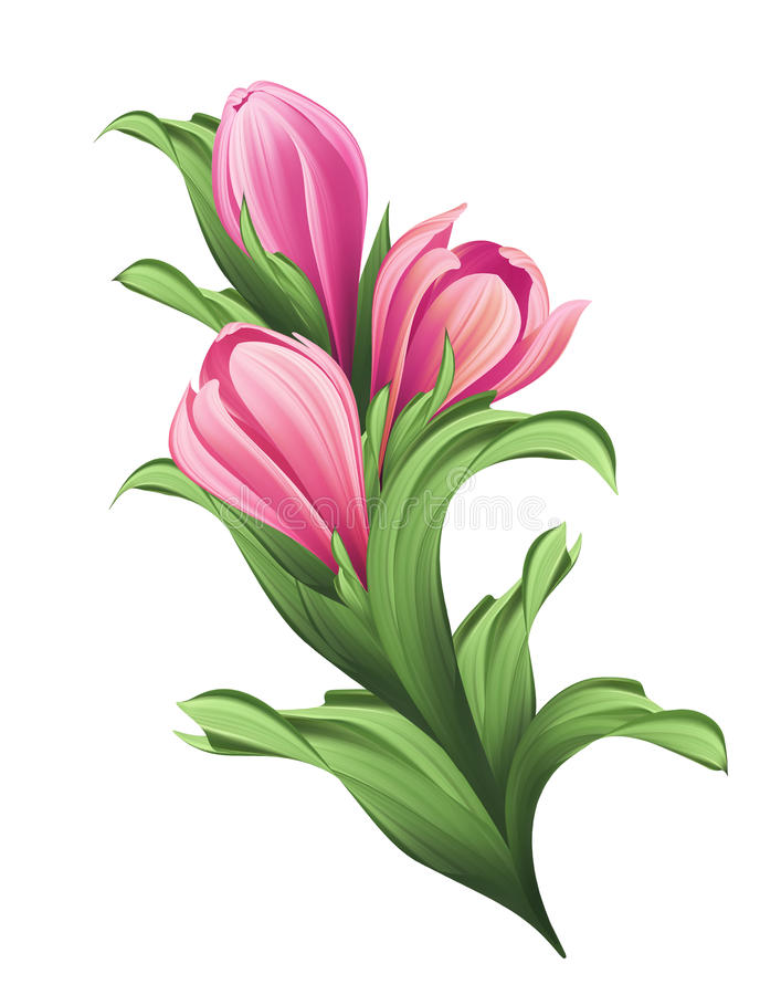 Bunch of flowers, pink tulip buds and green leaves illustration. Isolated on white background stock illustration