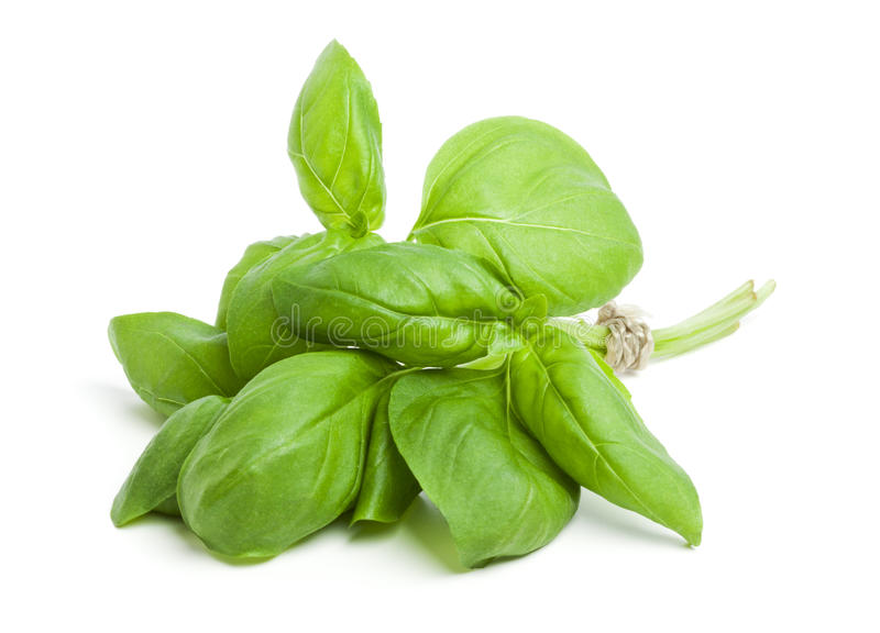 Download Bunch Of Fresh Basil Stock Photo - Image: 23108650