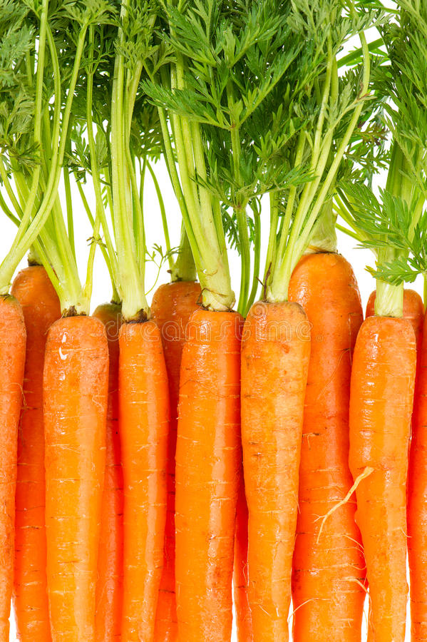 Bunch Of Fresh Carrots Over White Stock Photography