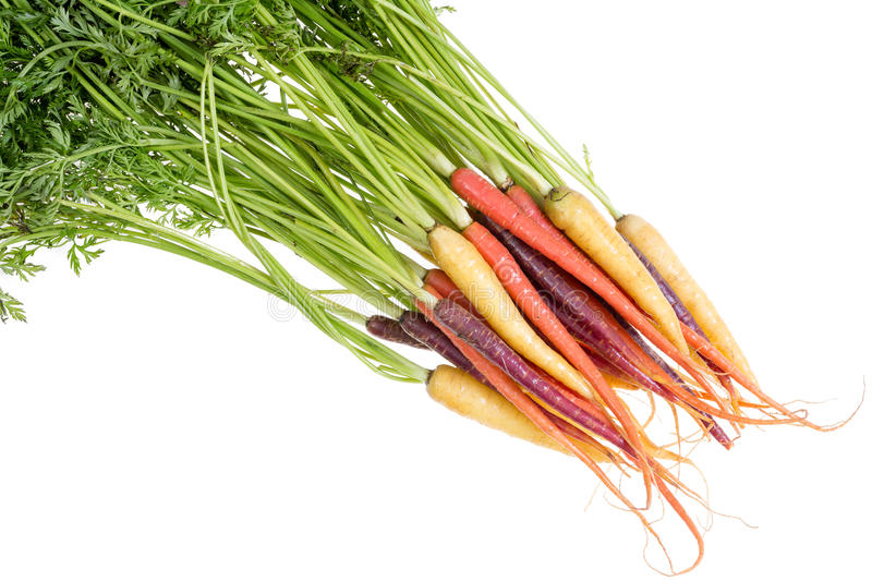 Bunch of fresh carrots in three different colors. Bunch of fresh healthy organic carrots in three different colors, orange, yellow and purple, with their green royalty free stock photography