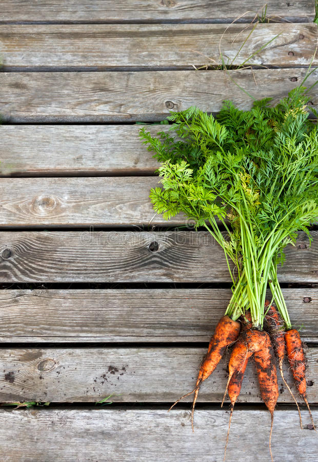 Bunch of fresh carrots on a wooden background stock photo