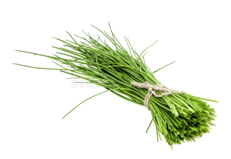 A bunch of fresh green chives stock photography