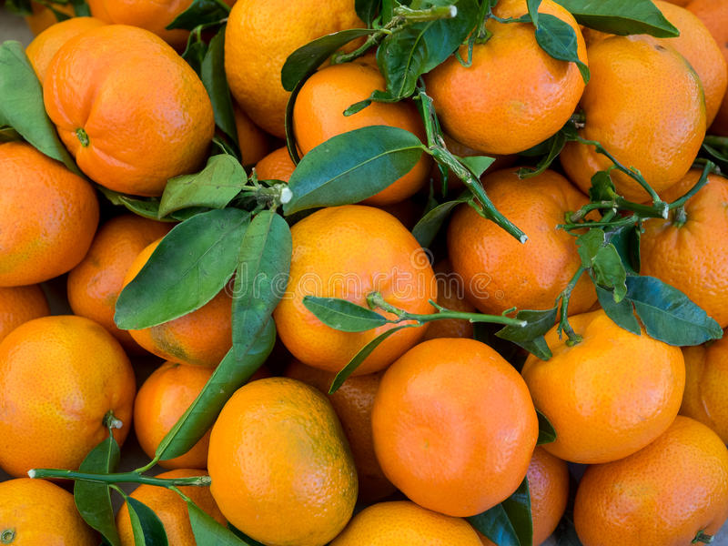 Bunch of fresh clementines royalty free stock photography