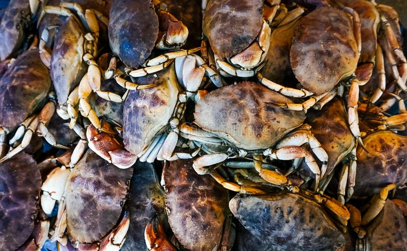 A Bunch of Fresh Crabs. On display at a fish market royalty free stock image