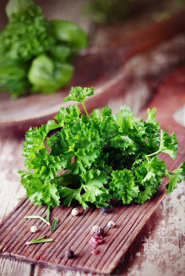 Bunch of fresh crinkly parsley stock image