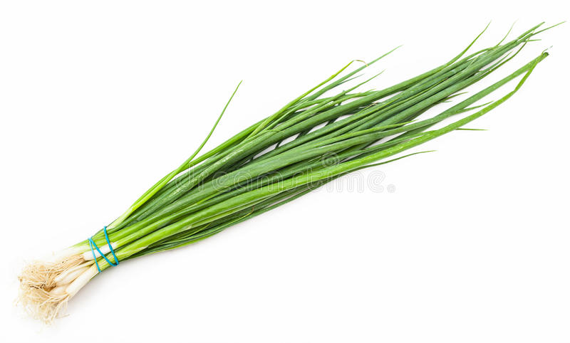 Bunch of fresh cut green chives onion on white stock image