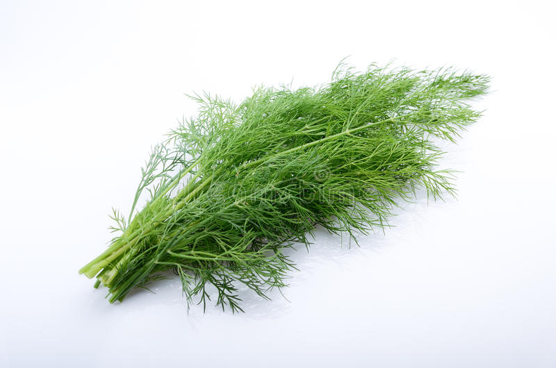 Bunch of fresh dill. Isolated on white background royalty free stock photo