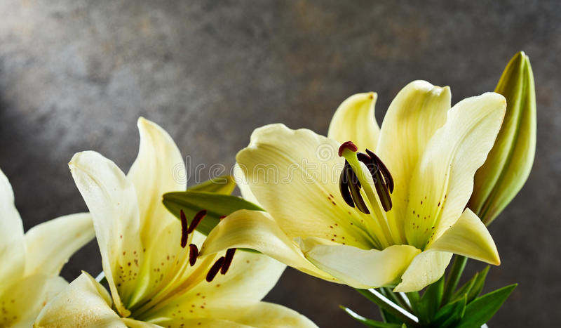 Bunch of fresh fragrant yellow day lilies stock photography