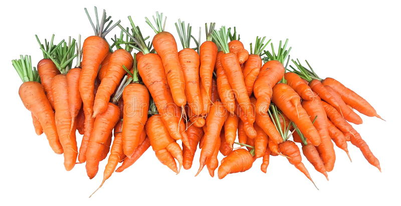 Bunch of fresh garden carrots isolated on white background royalty free stock photo
