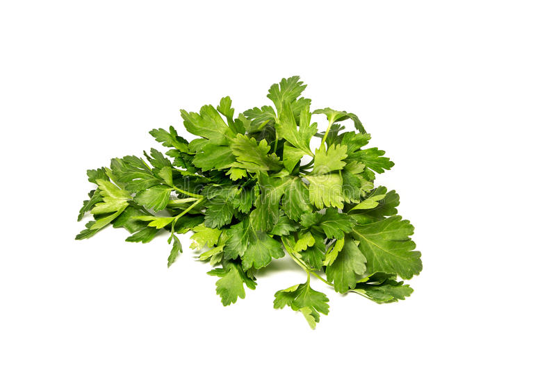 Bunch of fresh green curly parsley. Isolated on white background stock photo