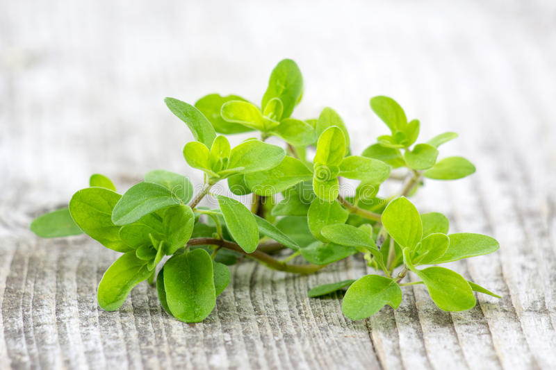 Bunch of fresh marjoram royalty free stock images
