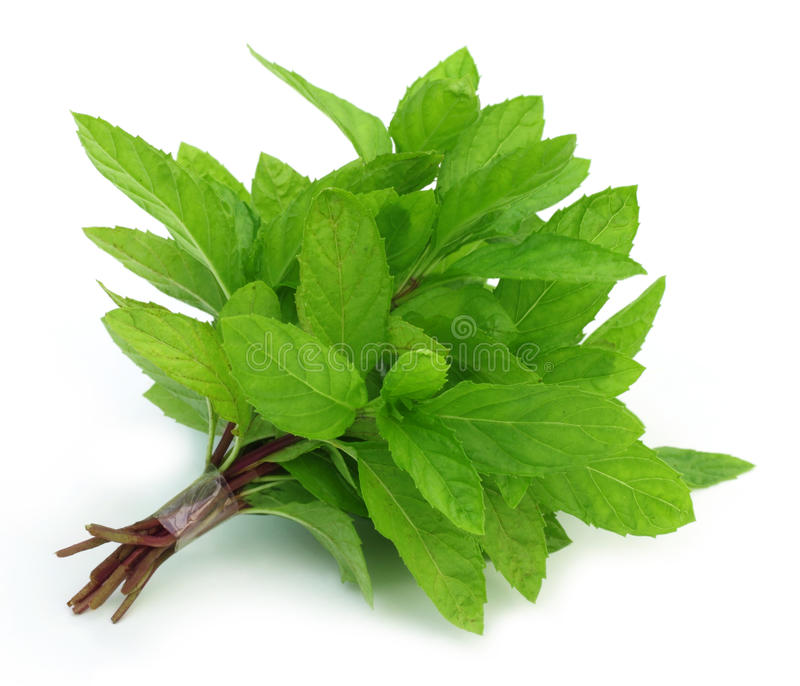Bunch of fresh mint leaves. Over white background royalty free stock photography
