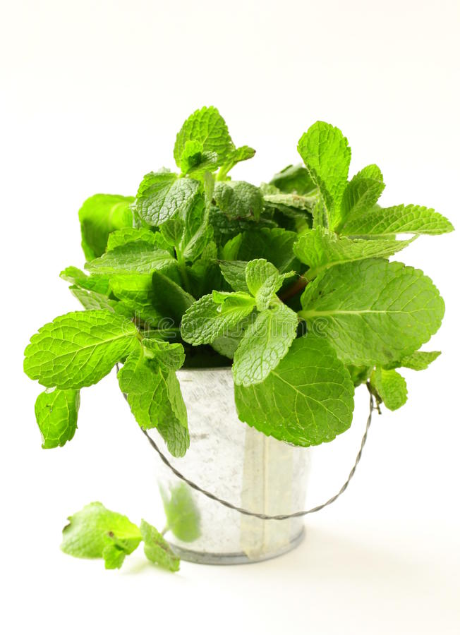 Download Bunch Of Fresh  Mint On White Background Stock Image - Image: 23934783
