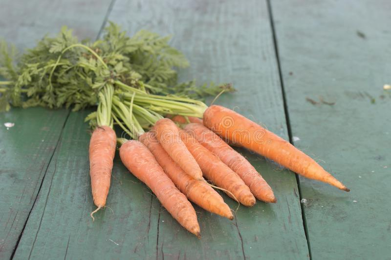 Bunch of fresh organic carrots with leaves on a green wooden table royalty free stock image