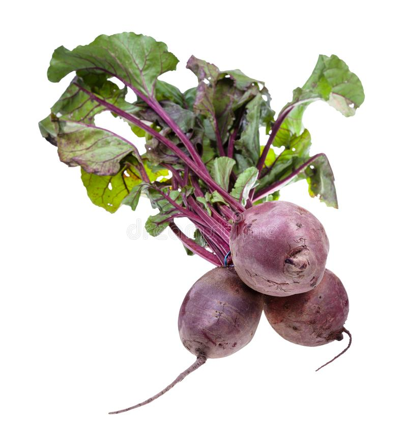 bunch of fresh organic garden beet roots isolated royalty free stock photos