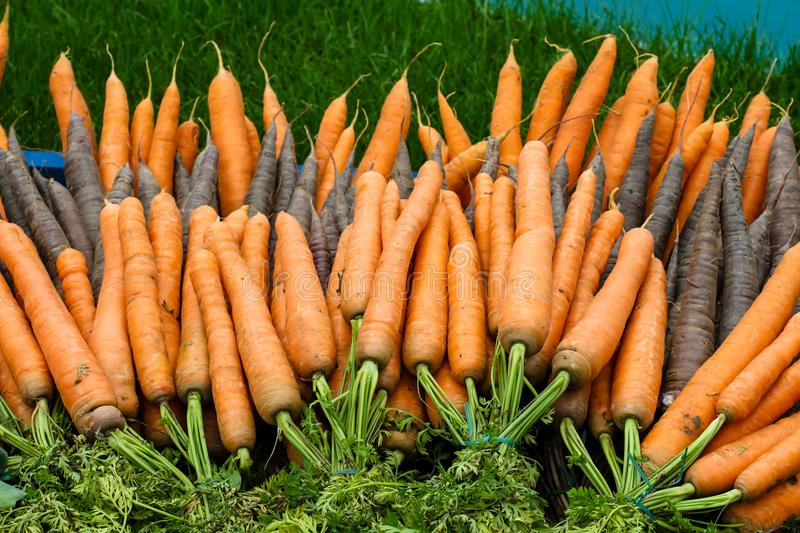 Bunch of fresh and organic raw carrots still with green leaves to be sold on a vegetable stand in a food market royalty free stock images