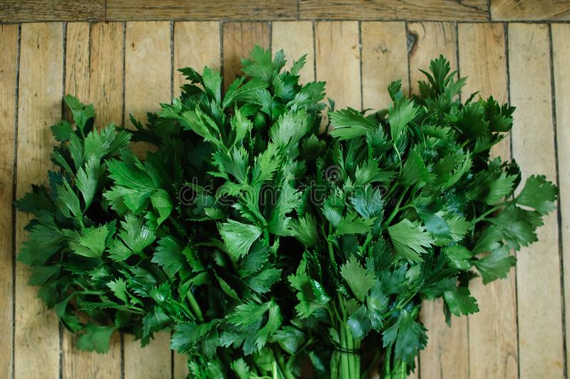 Bunch of fresh parsley celery on a wooden table. Healthy eating, raw food concept background. Fresh greens in the royalty free stock photos