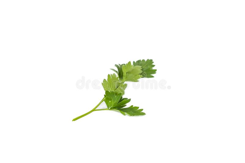 Bunch fresh parsley isolated on white background. Close up stock photography