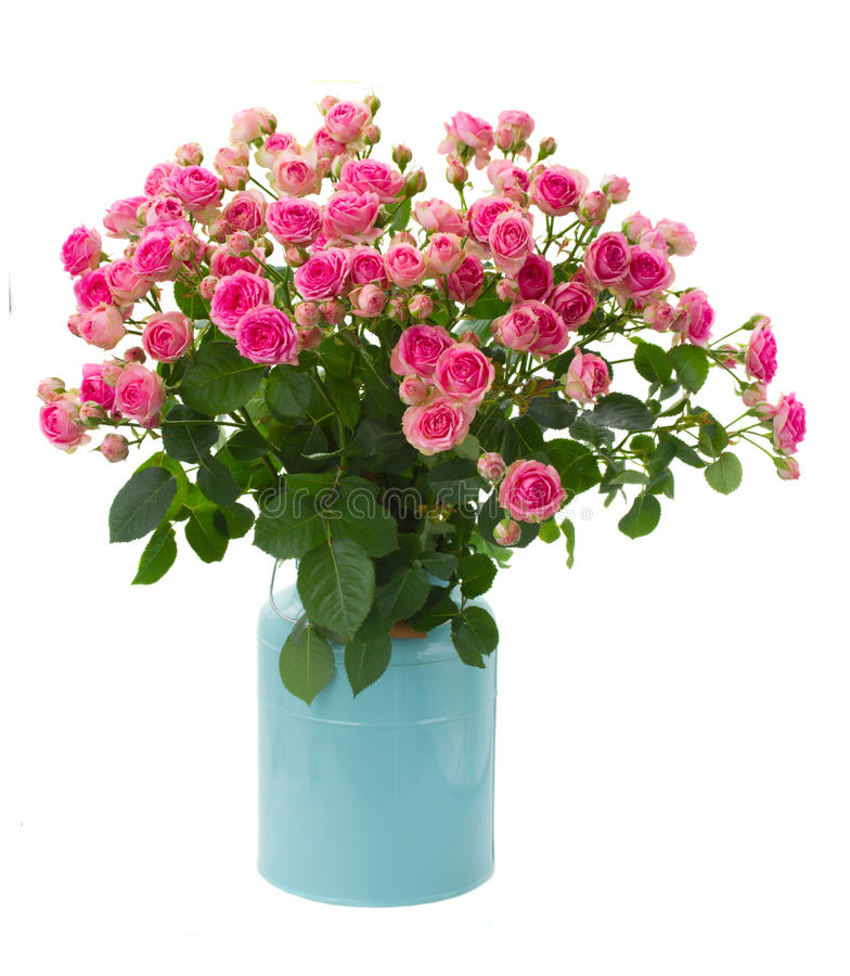 Bunch fresh pink roses in blue pot. Bunch of fresh pink roses in blue pot isolated on white background royalty free stock photos