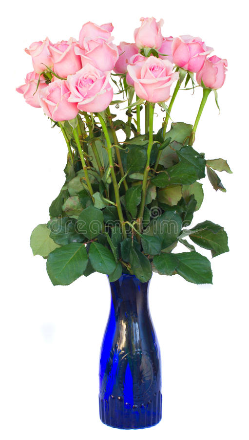 Bunch of fresh pink roses on white. Bunch of fresh pink roses in blue vase isolated on white background royalty free stock photography