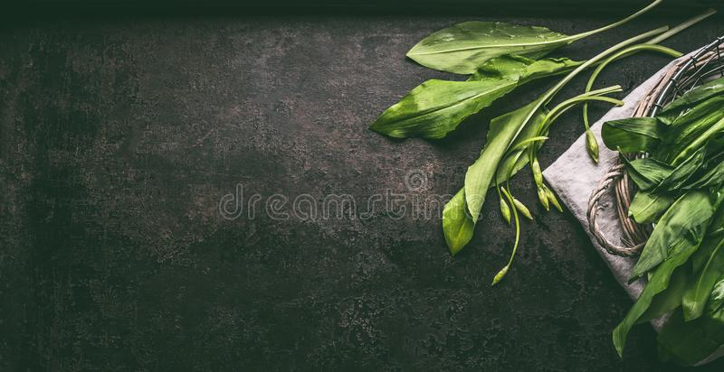Bunch of fresh ramson, wild garlic, leaves on dark rustic background, top view.  Healthy spring seasonal food, banner. Copy space. Bunch of fresh ramson, wild royalty free stock photography