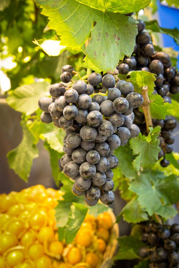 Bunch of fresh red grapes with green leaf stock image