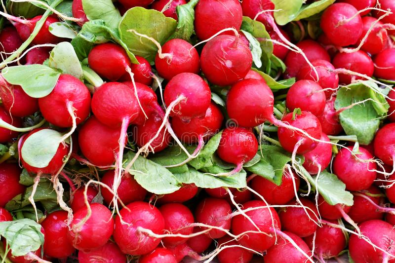 Bunch of fresh red radish at the market royalty free stock images