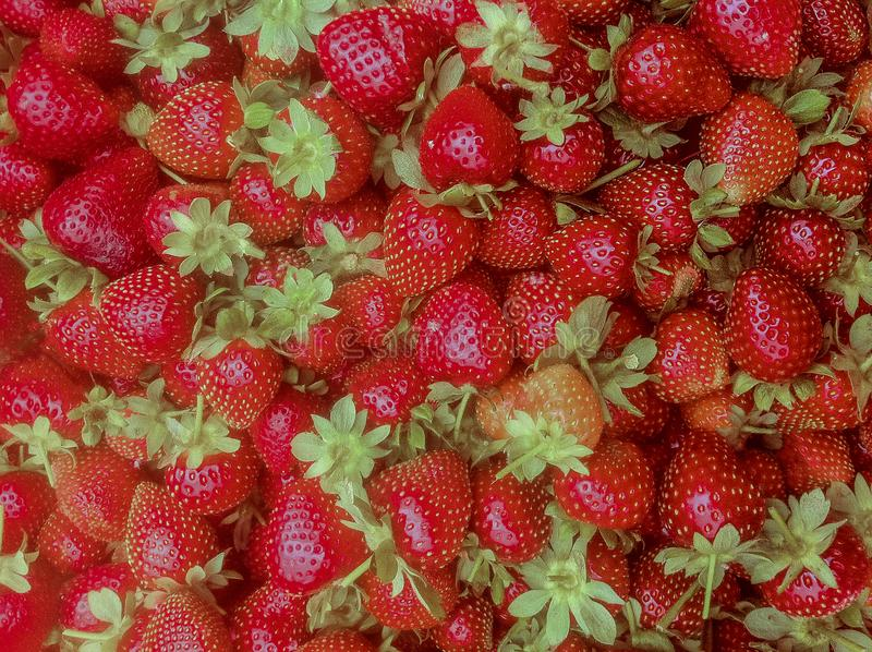 Bunch of fresh red strawberries royalty free stock photo
