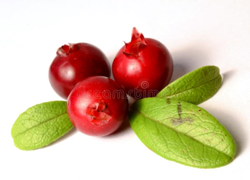 Bunch of fresh ripe cranberries or cowberries on white royalty free stock image