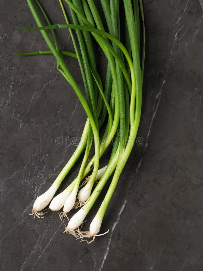 Bunch of Fresh spring onions with bulbs on a grey marble background. High resolution photo stock images