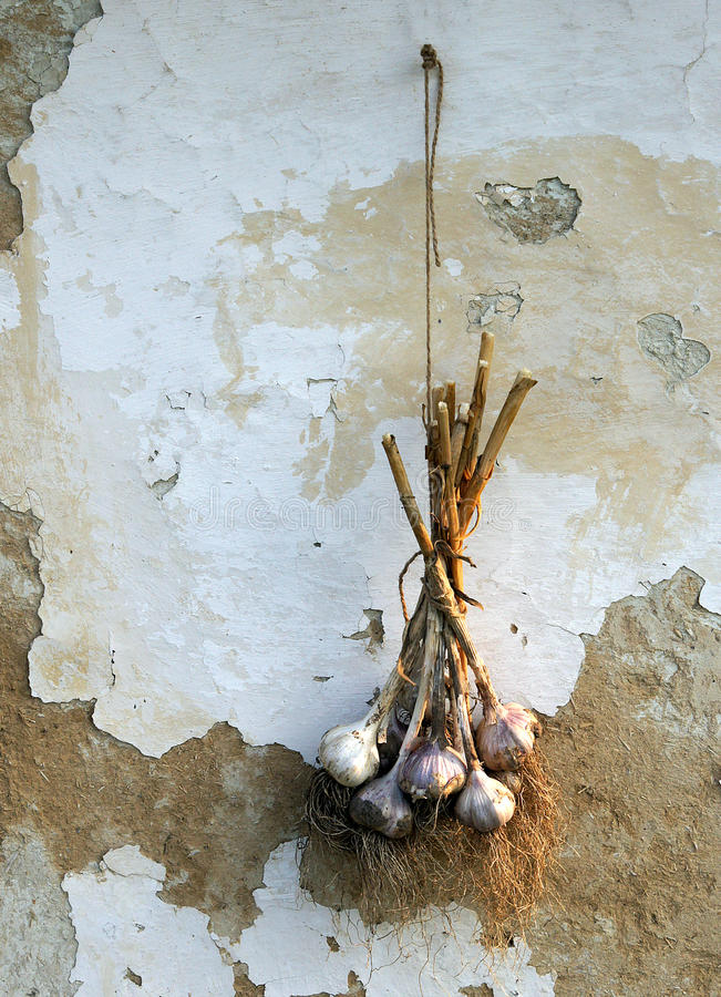 Bunch of garlic on. A background of the old house wall royalty free stock images