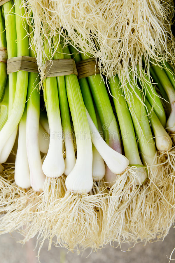 Bunch Of Garlic Fresh Raw Vegetables Food Stock Image