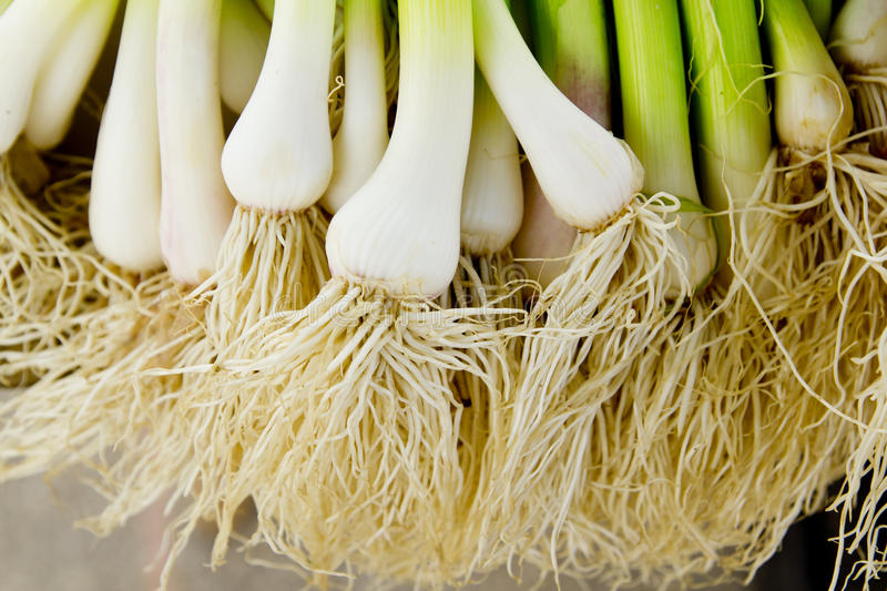 Download Bunch Of Garlic Fresh Raw Vegetables Food Stock Image - Image: 19753381