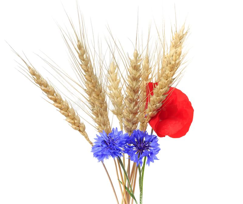 Bunch of golden wheat ears with red poppy and blue cornflowers o stock photography