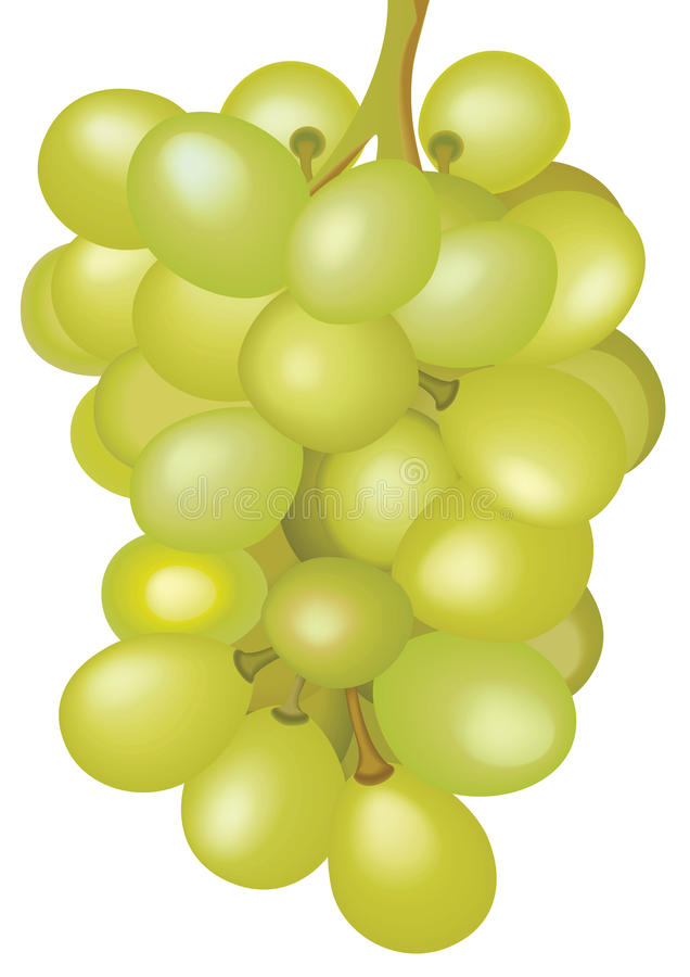 Bunch of grapes. Bunch of yellow grapes on a white background, illustration stock illustration