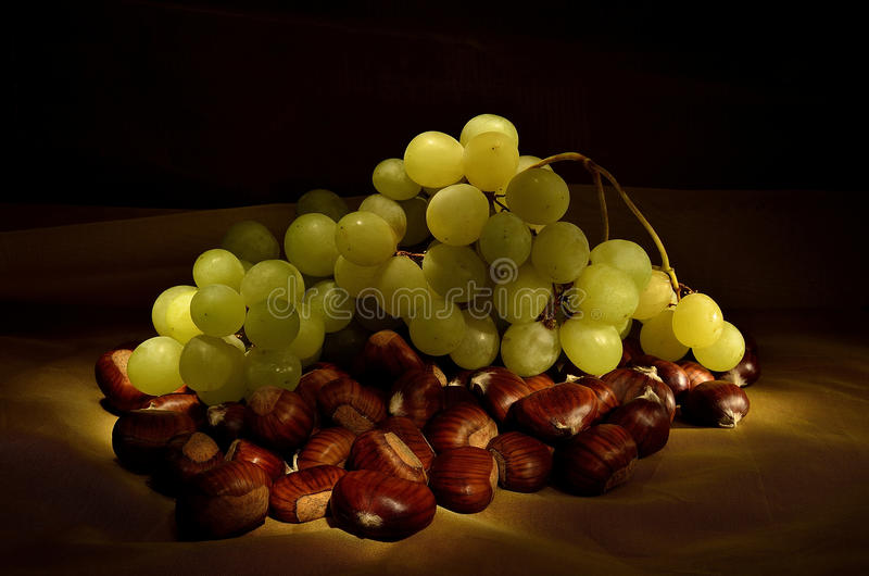 Bunch of grapes on a bed of chestnuts. `Bunch of grapes on a bed of chestnuts` came from research to bring the light to the dark brush bringing out a bunch of royalty free stock image