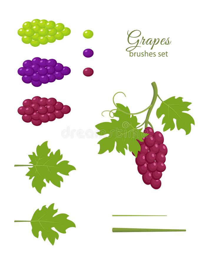 Bunch of grapes, brushes set royalty free illustration