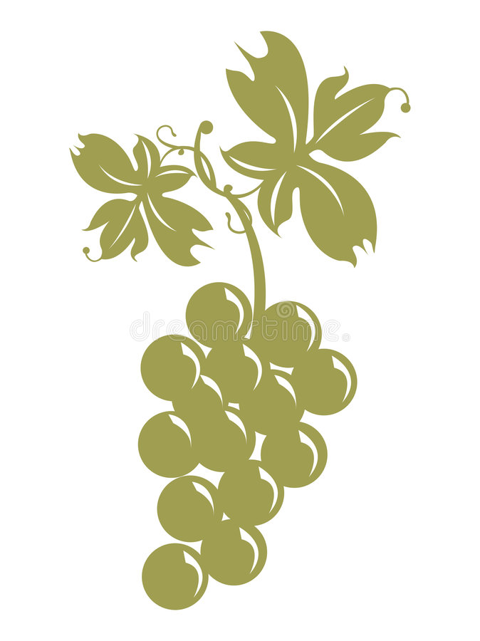 Bunch of grapes and leaves royalty free illustration