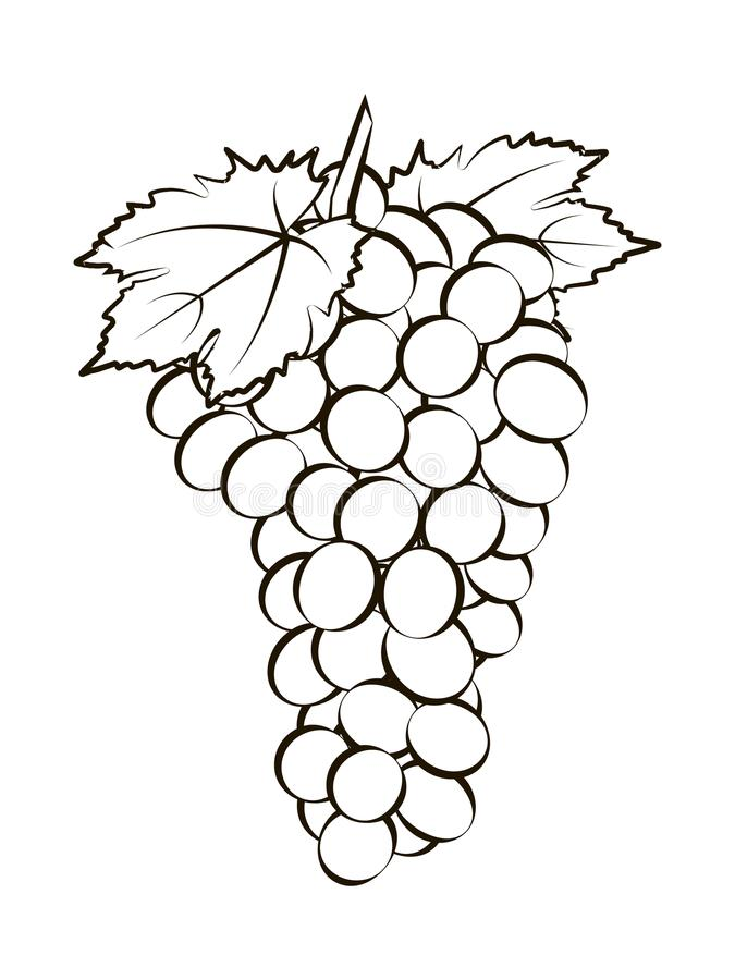 Bunch of grapes with leaves stock illustration