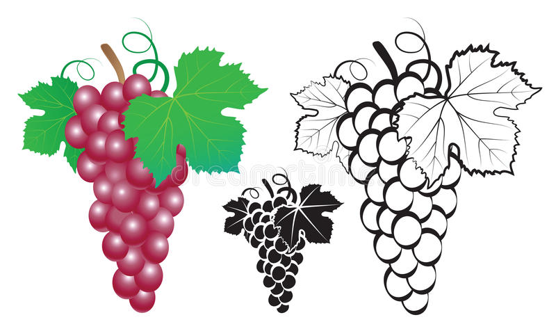 Bunch of grapes royalty free illustration