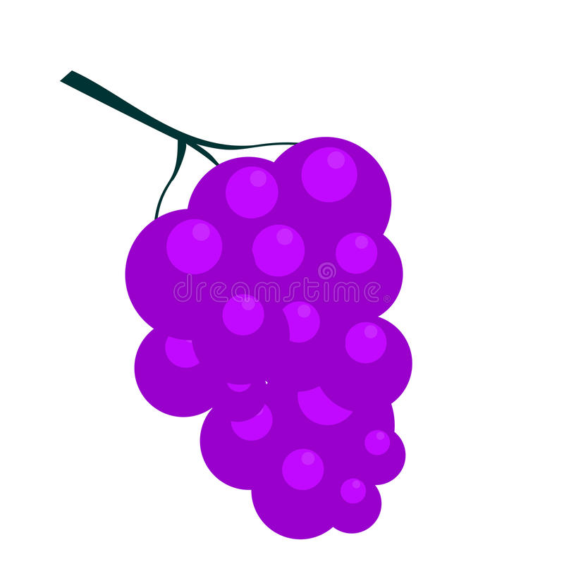 Bunch of Grapes. vector illustration