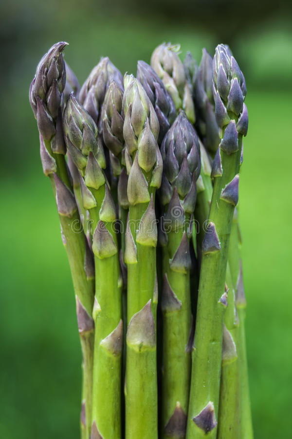 Bunch of Green Asparagus stock image