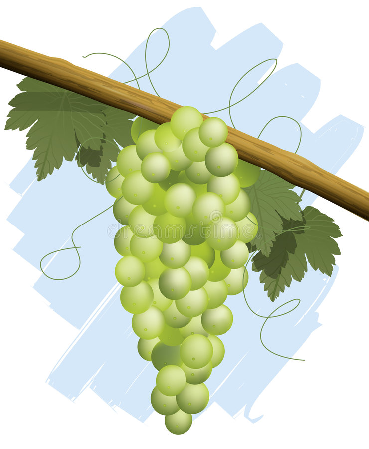 Bunch of green grapes royalty free illustration