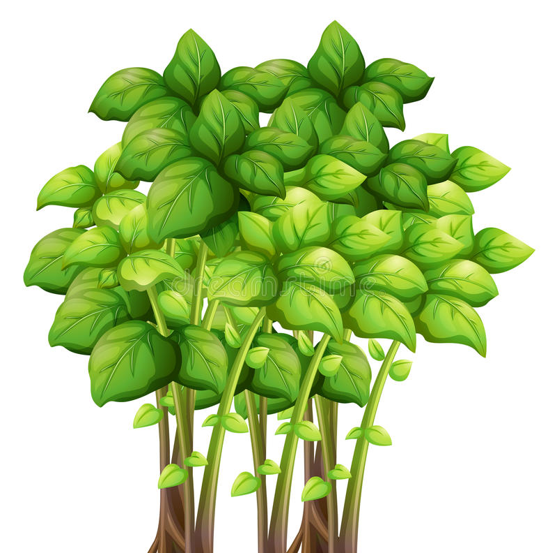 Bunch of green leaves. Illustration royalty free illustration